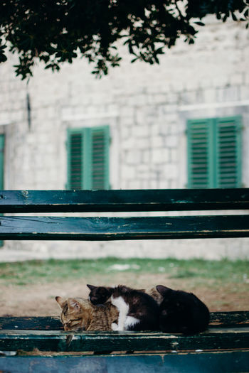 Cats City Town Animals Sleeping Cat Bench Cats On Bench Tree Architecture Close-up Building Exterior Whisker Cat Kitten Domestic Cat