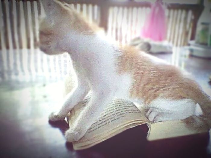 when eyes get tired.. the cat thinks its aladdin. let's see if there's a whole new world... Ginnie In A Novel Baby Abras Lookin For Jasmine 3wishes