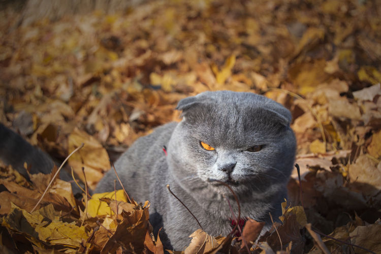 One Animal Animal Themes Animal Leaf Autumn Plant Part Mammal Nature Change No People Day Land Field Animal Wildlife Animals In The Wild Dry Close-up Leaves Pets Outdoors Animal Head  Whisker Vertebrate Cute Beauty In Nature