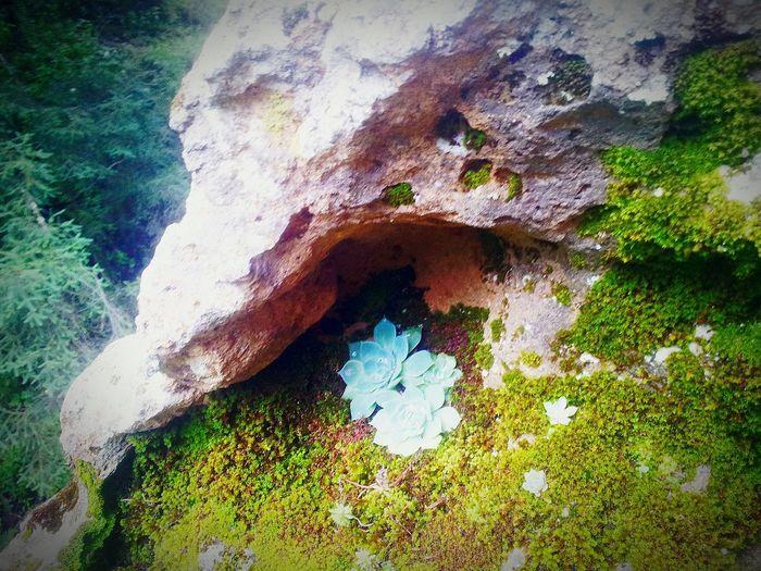 Nature Peña De Lobos Natural Beauty Naturaleza