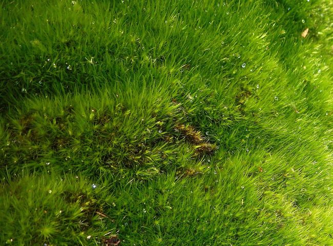 Backgrounds Beauty In Nature Close-up Full Frame Green Green Color Growing Lush Foliage Moss Nature Outdoors Tandlehill Park