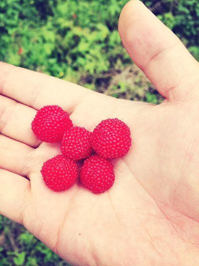 树莓 Nature