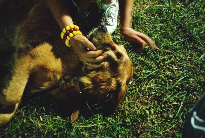 Sadık Dost Köpeksevgisi