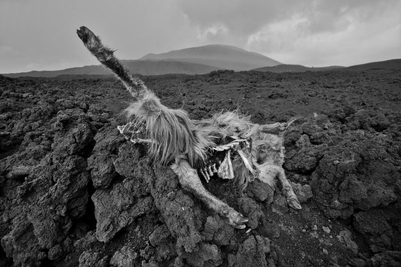 Dead animal on land