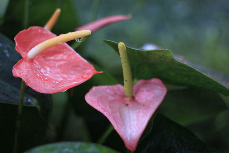 Flower in Truc