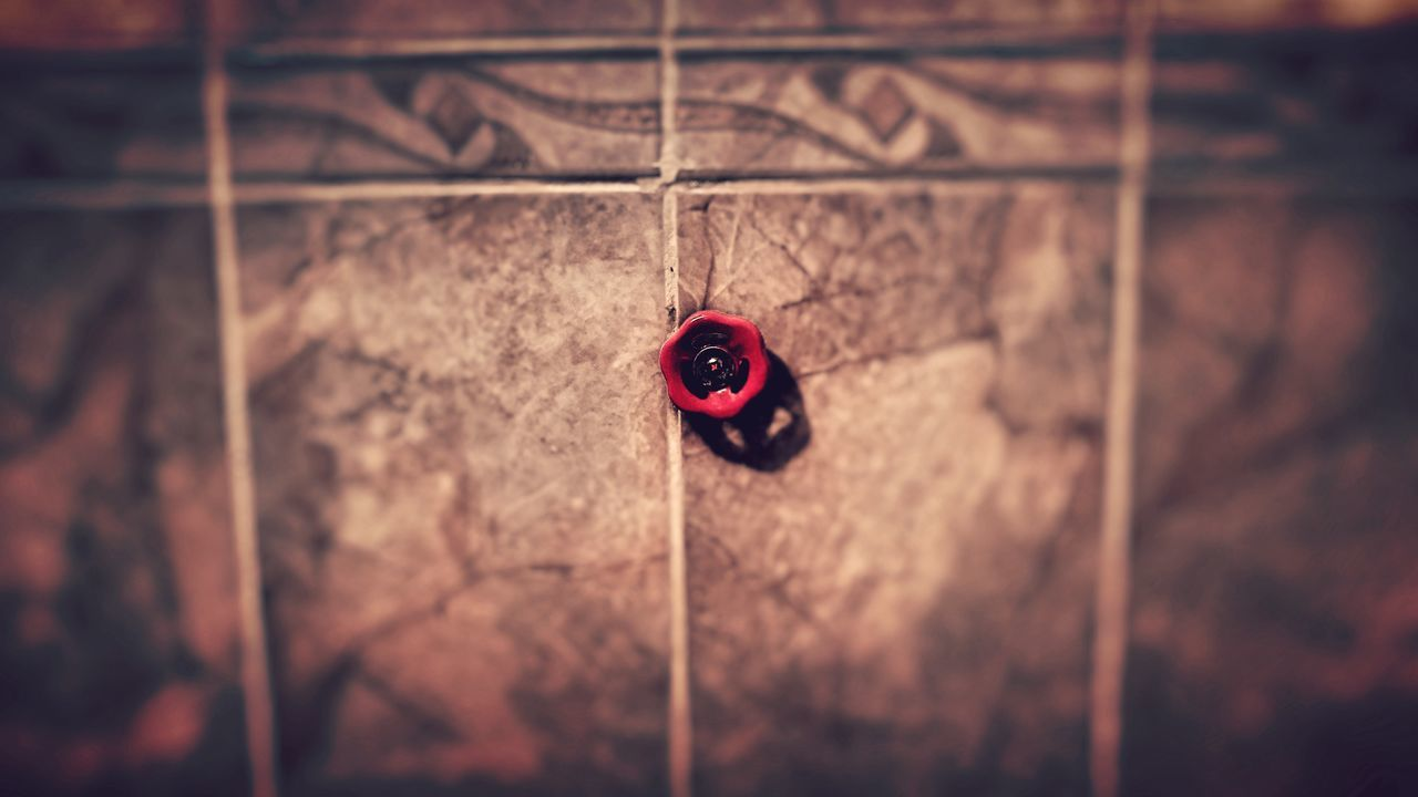 red, no people, close-up, tiny, ladybug, day, indoors, animal themes