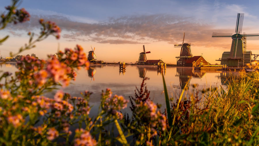 Plants growing against traditional windmills during sunset