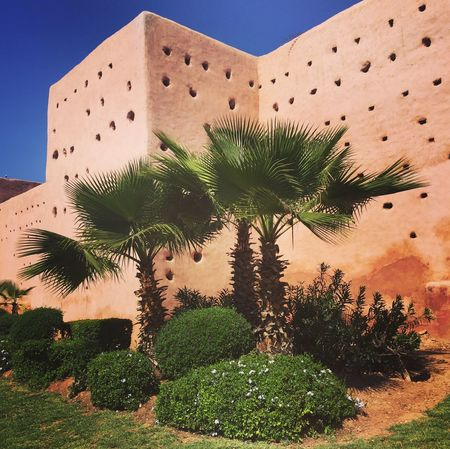 Wall of Mamouria Hotel Marrakech - Oasis Palm Tree Foliage Plant Foliage, Vegetation, Plants, Green, Leaves, Leafage, Undergrowth, Underbrush, Plant Life, Flora Foliage Architecture Angles And Lines