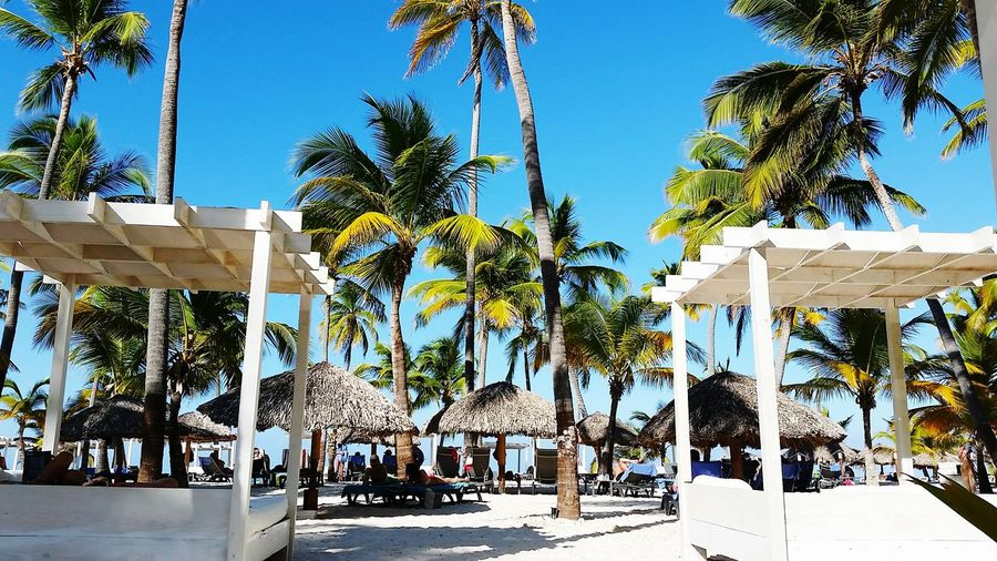 Enjoy Life Relaxing Beach Zen palm tree Punta Cana