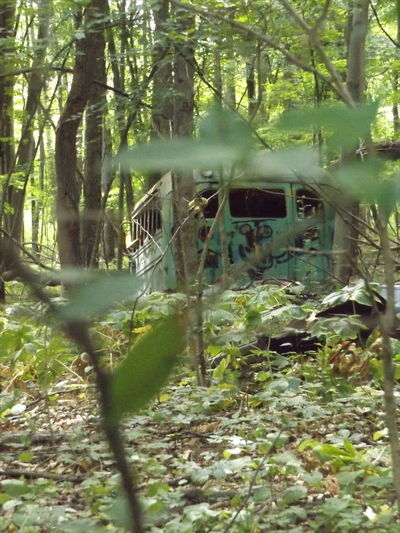Bus Bus In The Woods Nature And Lanscapes Jackson Michigan Nature_collection Nature Photography Trees And Leaves Trees And Nature Nature And Industry Nature And Industrial Landscape Eyeemphoto