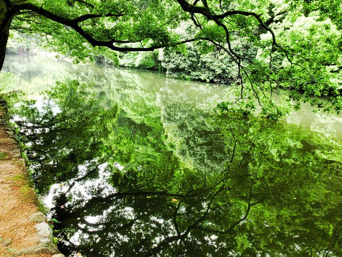 Hi! Hello World Taking Photos Day Beauty In Nature Water Green Color Tree No People Reflection Backgrounds Nature Outdoors Freshness Enjoying Life Check This Out Holiday Destination The Great Outdoors - 2017 EyeEm Awards Japan 香川 高松 栗林公園