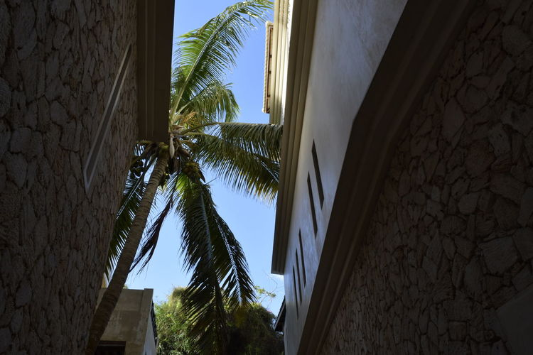 Low angle view of palm tree on street