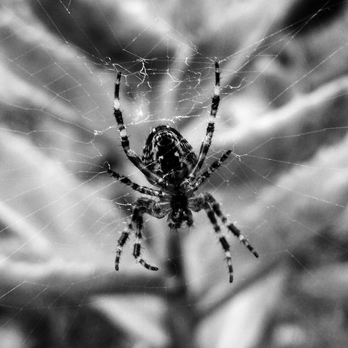 EyeEm Selects Garden Spider Spider Spider Web One Animal Web Nature Animal Leg Survival Focus On Foreground Close-up Fragility Animal Themes No People Animals In The Wild Intricacy Outdoors Animal Wildlife Day Full Length Nature Photography Enhanced Photograph EyeEm Gallery Beauty In Nature Photography EyeEm Best Shots