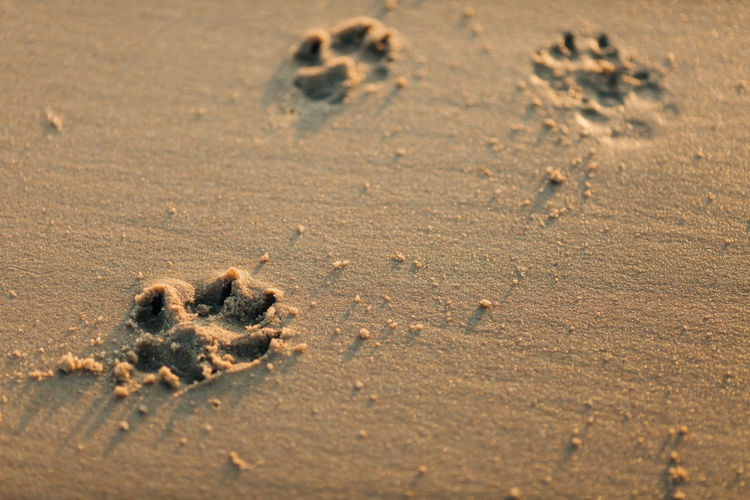 Land Sand Beach FootPrint Paw Print Day Nature No People High Angle View Animal Track Selective Focus Close-up Absence Brown Print Outdoors Pattern Track - Imprint Animal Full Frame Arid Climate