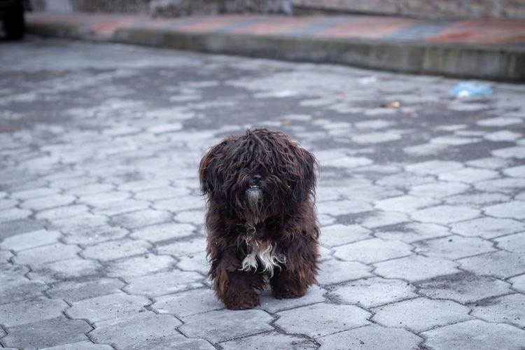 Alber FUNNY ANIMALS Fabian Funny Animal Animal Hair Dog Fabian Alber Fbn_lbr Pets Street