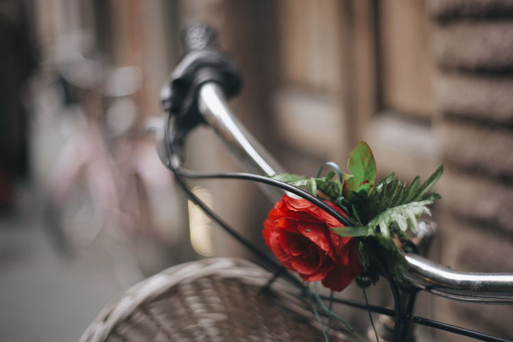 Artificial Flower On Bicycle