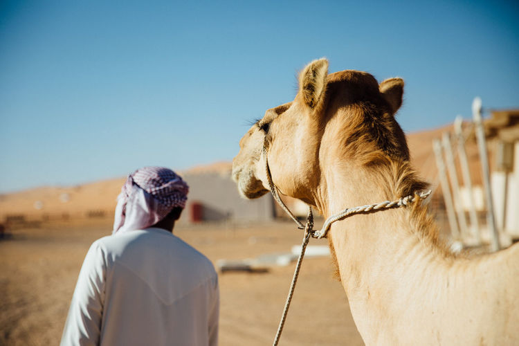 Animal Head  Animal Themes Blue Camel Clear Sky Copy Space Desert Domestic Animals Field Focus On Foreground Herbivorous Horse Landscape Livestock Mammal One Animal Outdoors Sand Sunlight Working Animal