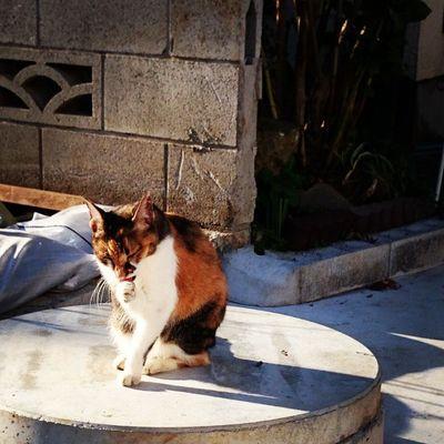 Cat Cat Animals