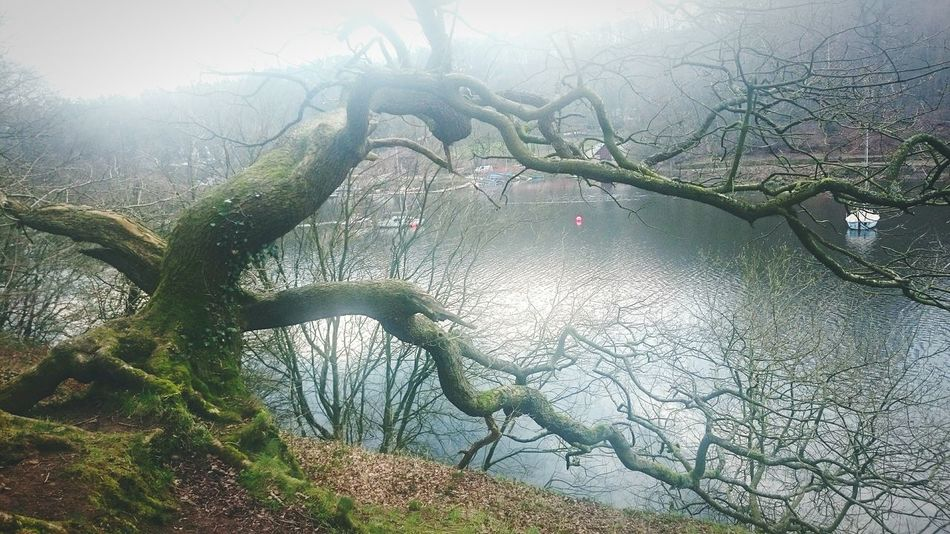 A foggy walk by the lake 😊 Rudyard Lake Lake Tree Outdoors No People Bare Tree Beauty In Nature Branch Nature