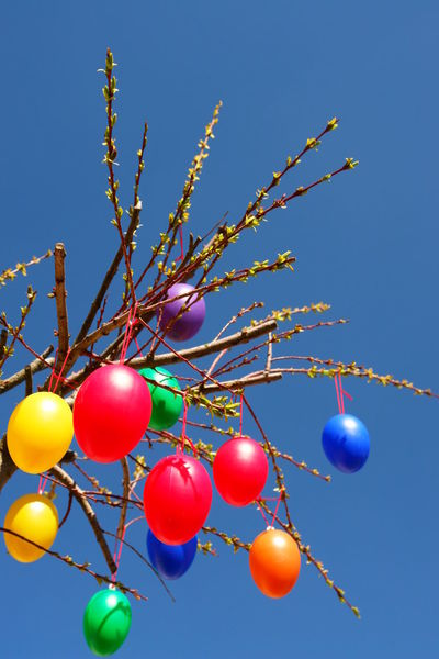 Easter Tree Easter Easter Eggs Easter Tree Balloon Blue Celebration Clear Sky Day Eatertree Eggs Helium Balloon Low Angle View Multi Colored Nature No People Outdoors Sky Sunlight Tree