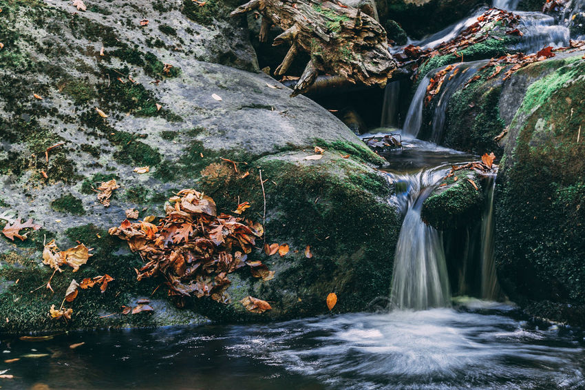 At the bottom of river loop you will find this peaceful stream of water undisturbed Autumn Beauty In Nature Day Forest Freshness Leaf Long Exposure Moss Motion Nature No People Outdoors River Rock - Object Scenics Tranquil Scene Tranquility Tree Water Waterfall Waterfront