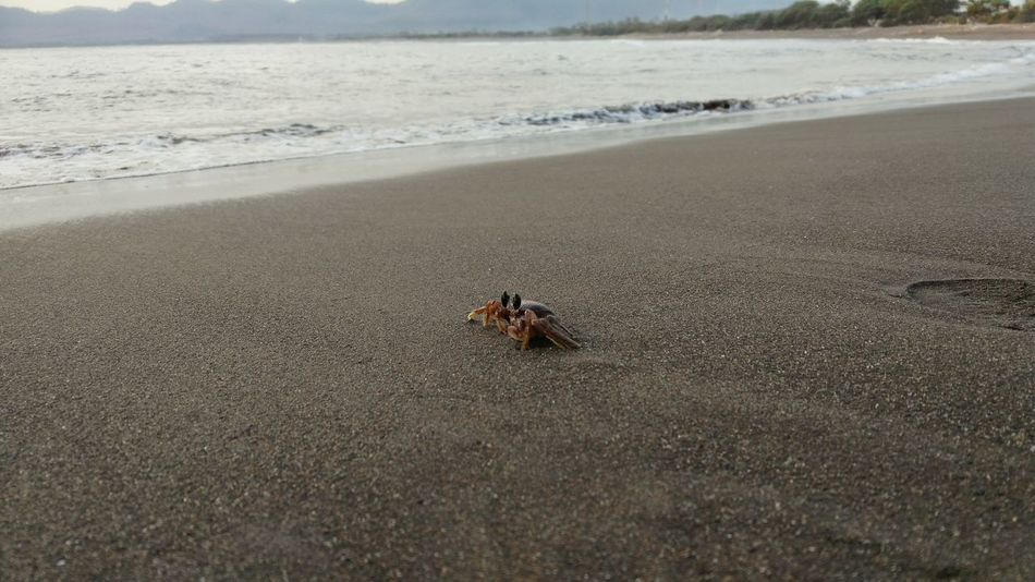 Beach Indonesiantraveler Sunset Crab