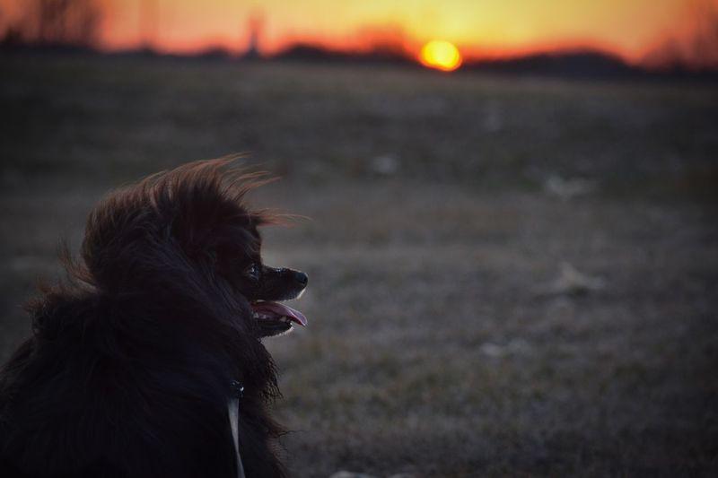 Dog looking away at sunset
