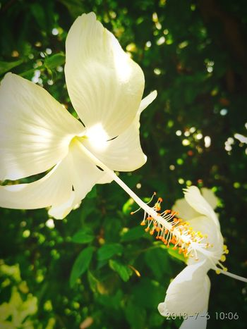 flower Flower Springtime Petal Stamen Blossom Insect Close-up Plant