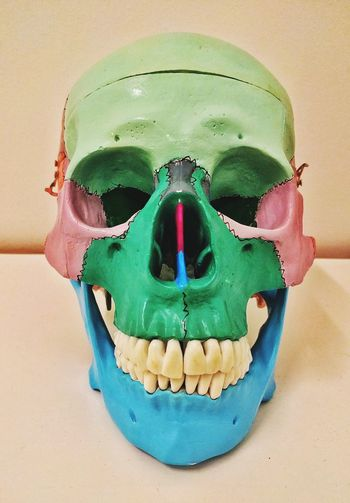 Skull Colored Skull Coloured Skull Creapy Rhriller Colours Colors Physiotherapy Chiropractor Chiropractors Horror