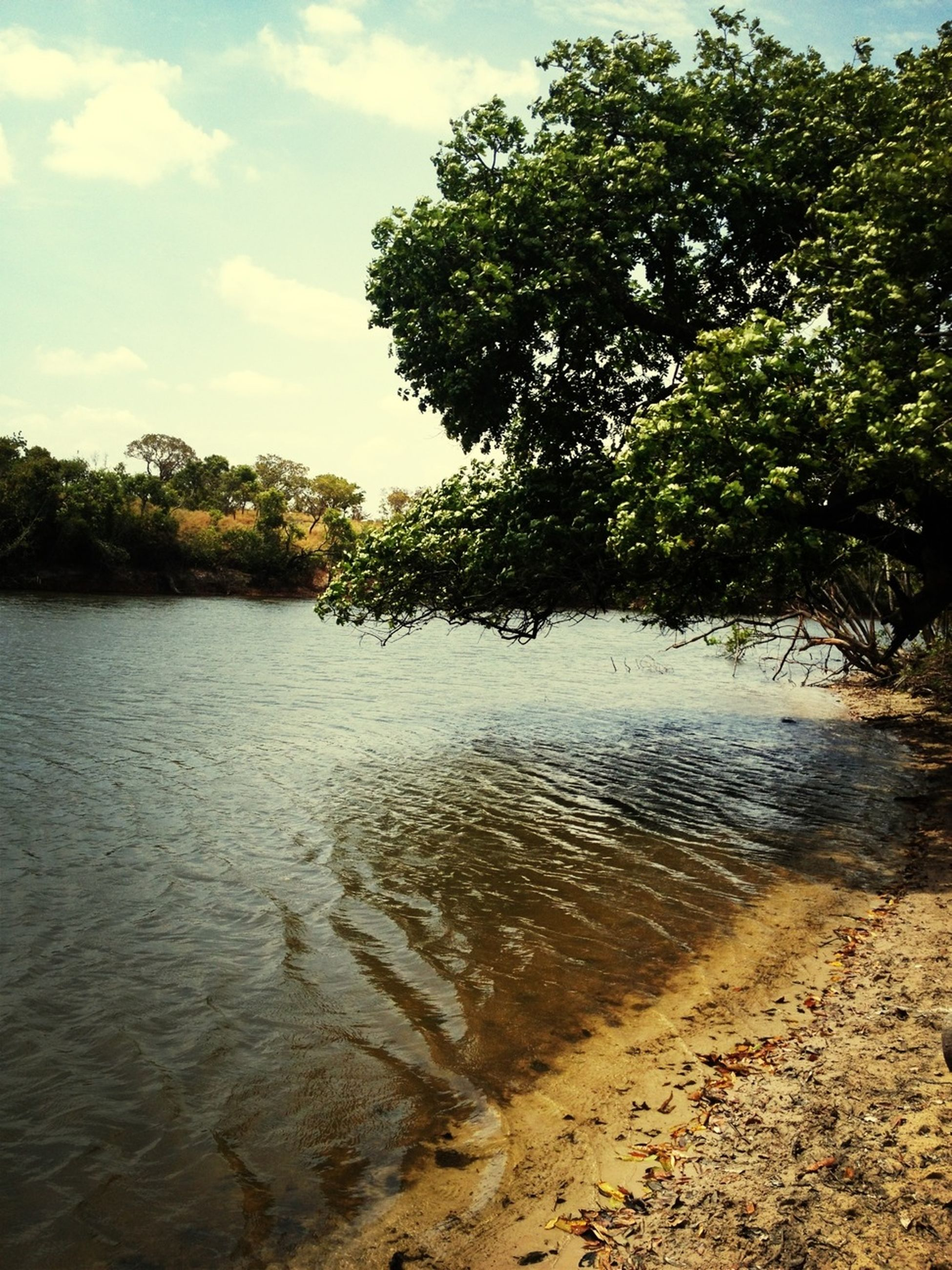 water, tree, tranquility, tranquil scene, sky, nature, beauty in nature, scenics, lake, growth, reflection, beach, waterfront, rippled, river, sand, day, idyllic, outdoors, no people