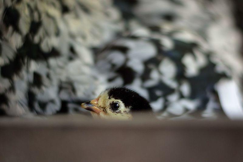 Close-up of young bird outdoors