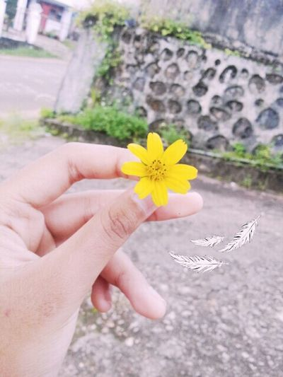 Discover this Flower