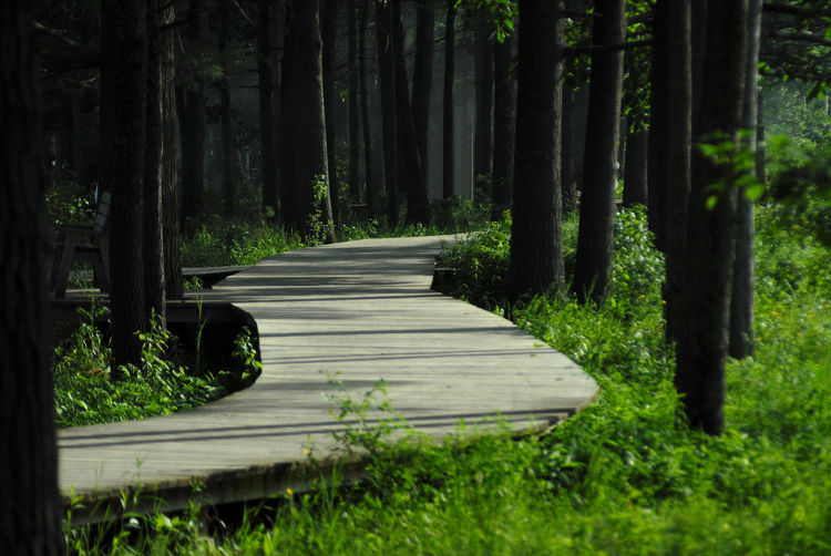 Follow the path..... ☺ there's an 🍦 shop at rhe end 😋 Canada Quebec Oka Tree Forest Grass Pinaceae Tree Trunk Pine Woodland Needle - Plant Part Evergreen Tree Pine Tree Empty Road Woods Lush - Description Coniferous Tree Bark Plant Bark Pine Wood Pine Cone Fir Tree Spruce Tree Treelined WoodLand The Great Outdoors - 2018 EyeEm Awards