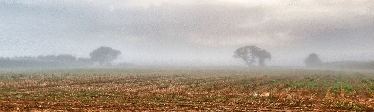 View of landscape in foggy weather