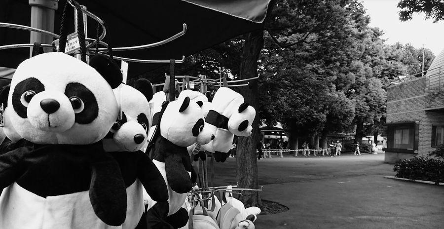 Ueno Tokyo Uenopark Walking Around Happy Time Smartphonephotography AndroidPhotography Holiday Japan Tokyo Panda PANDA ♡♡