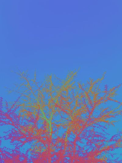 vsco distortia // Blue Multi Colored No People Nature Sky Clear Sky Refraction Beauty In Nature Backgrounds Outdoors Day Calming Image Nature Tranquil Scene Abstract Abstract Nature Abstract Photography Minimalism Minimalobsession Close-up Tree Multicolor