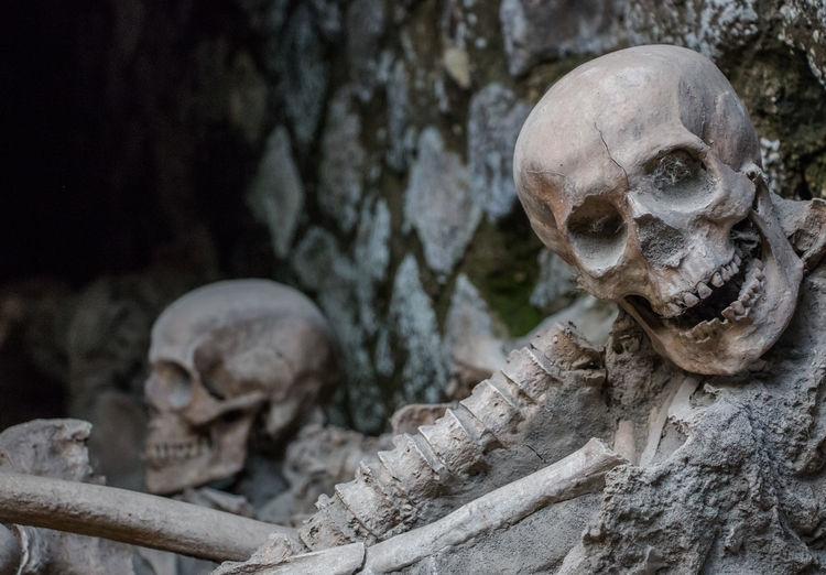 Human Skulls By Wall