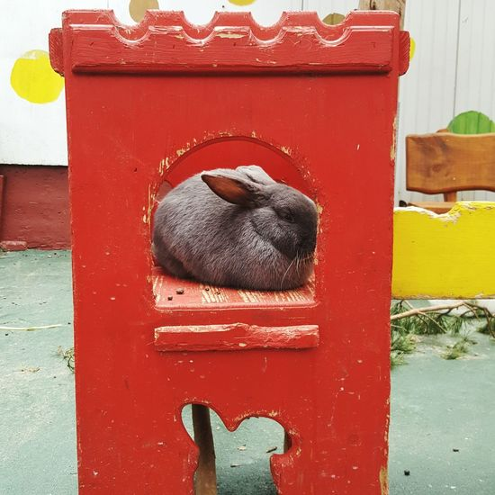 Prinzessin Red Wood - Material Door Day Outdoors No People Animal Photography Germany Photos Official EyeEm © Easter Ready Animals Ostern 2017 Pets Celle Rabbit 🐇 Germanypage Germany🇩🇪 Germany 🇩🇪 Deutschland Rabbits Animal Portrait GERMANY🇩🇪DEUTSCHERLAND@ Osterhase EyeEm Diversity Easter Hase Easter Bunny EyeEm Diversity Long Goodbye EyeEmNewHere Art Is Everywhere