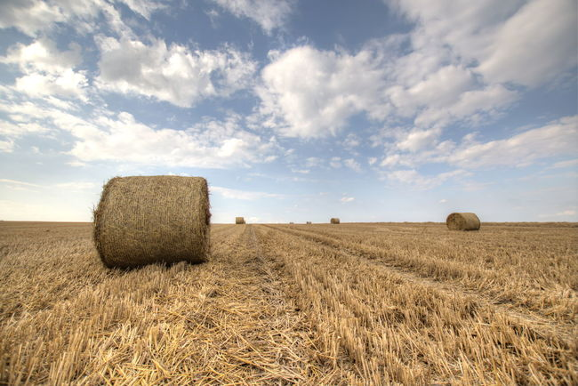Nach der Ernte. Agriculture Hay Bale  Farm Rural Scene Tranquil Scene Tranquility Field Landscape Sky Harvesting Crop  Beauty In Nature Scenics Nature Rolled Up Solitude Horizon Over Land Outdoors Blue