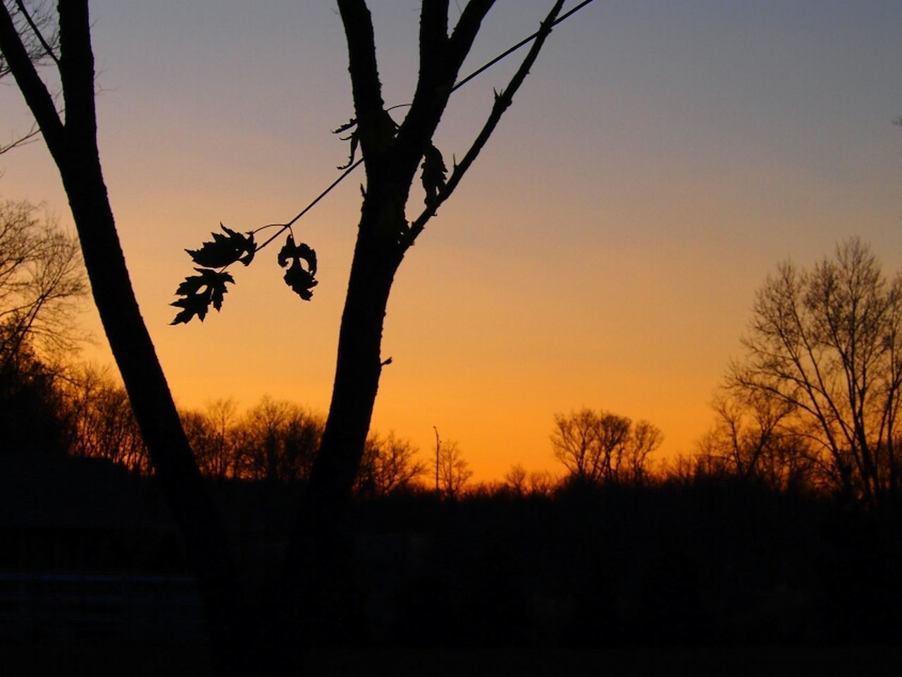 sunset, tree, silhouette, nature, beauty in nature, orange color, no people, scenics, tranquil scene, bare tree, sky, tranquility, branch, outdoors, growth, landscape, day
