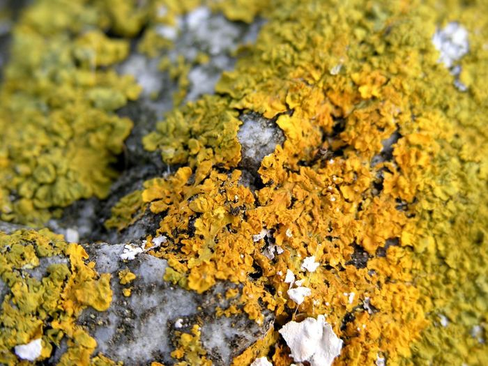 Close-up of lichen on rock
