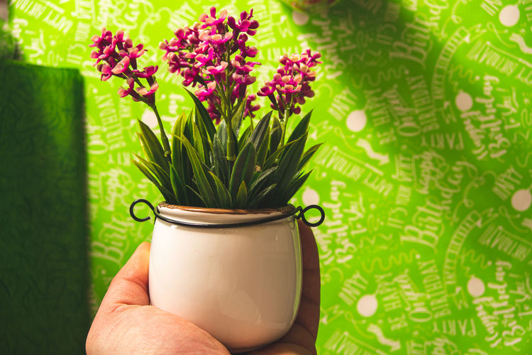 Midsection of person holding purple flower in pot