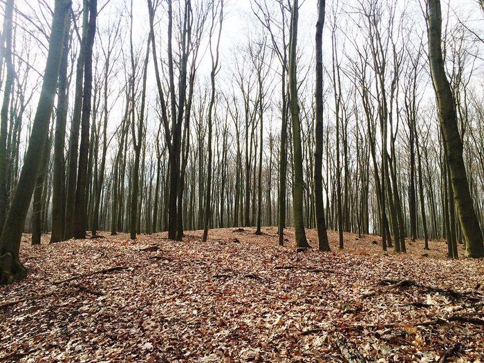 Escapism Woods Brandenburg