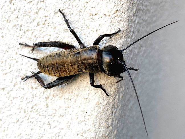 Insect Invertebrate Animal Themes Animal Animal Wildlife Animals In The Wild One Animal Day Animal Body Part Animal Antenna Wall - Building Feature No People Zoology Wall Arthropod High Angle View Nature Outdoors Textured  Close-up