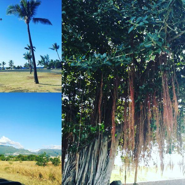 Reunionisland 🌴 Le Port Tropical Climate Island Life Réunionisland