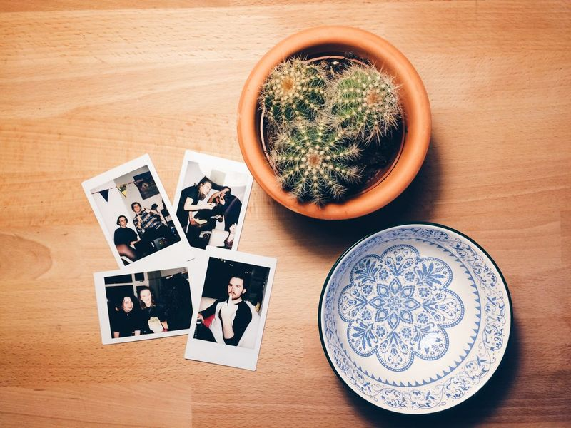 Bow Cactus Presents Wood Close-up Indoors  Photography Polaroid