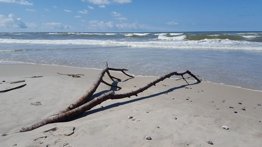 Driftwood at the North Sea Beach Beauty In Nature Branch Destiny Driftwood Future Vision Futurephotographer Horizon Over Water Lonliness Lost In Space... Love Denmark Nature North Sea Coast Sand Scenics Sea Sea Side Seascape Shore Tranquil Scene Tranquility Vacations Water Wave Wood - Material