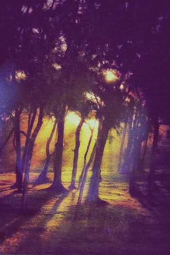 Filaos trees Sunset Scenery Trees Nature Light And Shadow Goldenhour AMPt_community NEM Painterly Nature_collection Fineart