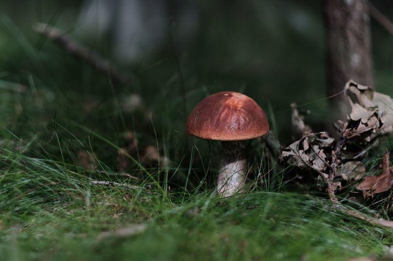 Close-Up Of Mushroom Outdoors