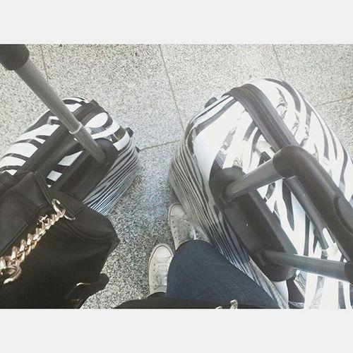 Tgif qnd thank god there's free wifi ♥.♥ Bags Bag Fly Flying Zebra Love Music Alternative Piano Piercetheveil Ptv Bringmethehorizon Bmth Alltimelow Falloutboy  Travel Travelgram Book Bookstagram Fashion Fashionista Hair PrettyLittleLiars PLL  gossipgirl gg chair